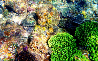 Bali. Under the water